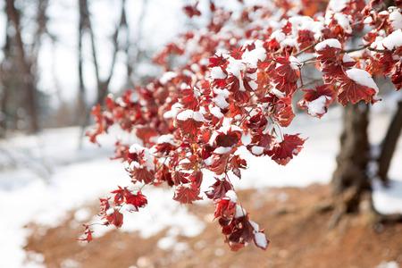 Scenery of traditional Korean ritual shrine on snowy day Stock Photo