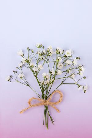 Flower pattern shot in studiobackgroundwallpaper - White gypsophila isolated Stock Photo