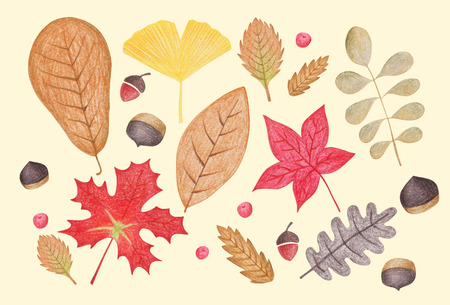 Korean autumn landscapes drawn by colored pencils - Maple leaves Stock Photo