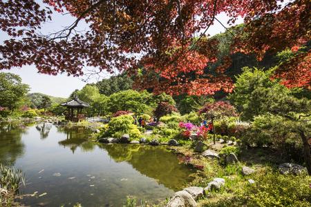 Koreaans landschap - Maples-bomen en paviljoen rond vijver Stockfoto