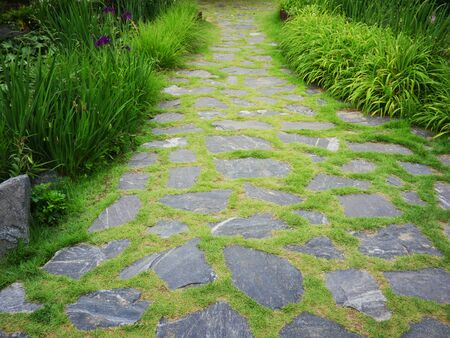 Stepping stones on walking trail