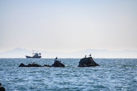 갈매기 바다 중간에 바위 섬에 앉아
