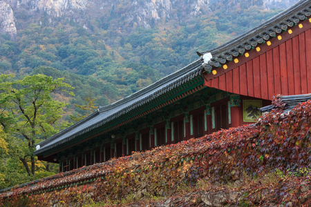 Mt. Seorak in Autumn - Ivy-covered stone fence with tiled roof gate