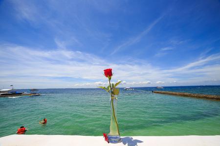 Cebu Island - Red rose in a transparent vase