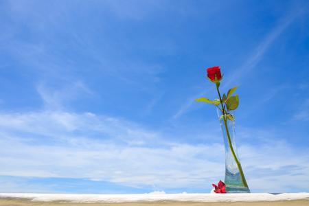 Cebu Island - Red rose in a transparent vase under the blue sky Фото со стока