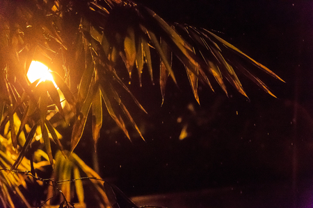 Cebu Island - Street lamp light and palm tree leaves