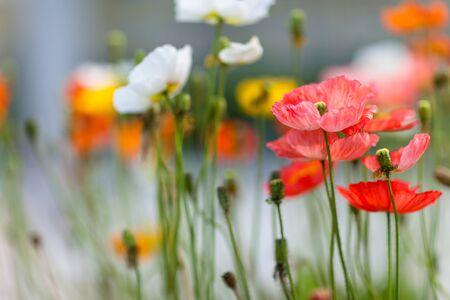 Close up shot of wild flowers Stock Photo
