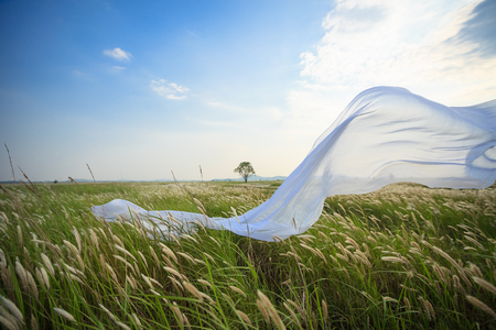 White fabric blowing in the wind in the reed field