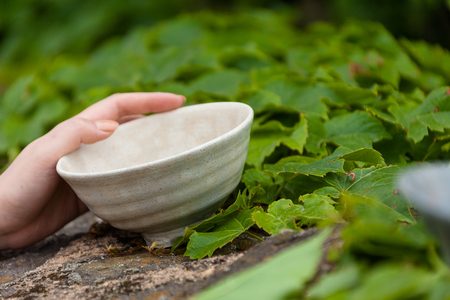 Korean folk village - A womans hand touching a pottery bowl on a ivy covered rock wall