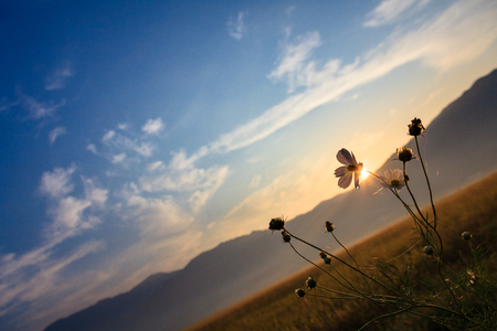 코스모스 꽃의 총을 닫습니다 스톡 콘텐츠
