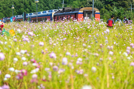 Train waiting for passengers besides the cosmos flower field Stock Photo