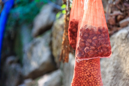 Red net bags of chestnuts and beans hanging on the rock wall in sun rays
