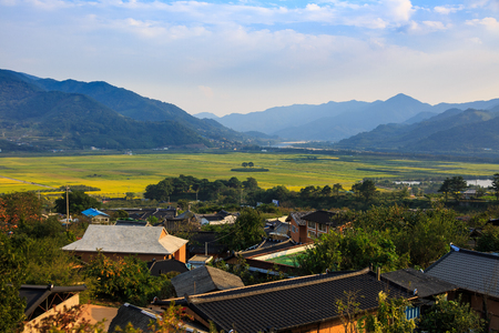 Aerial scenery of village and rice field