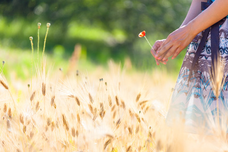 The isolated shot of a womans hands holding a wild flower