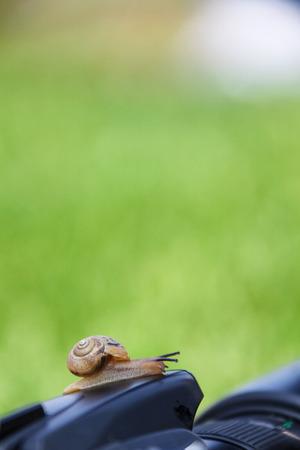 Pet snail-Snail moving on a camera