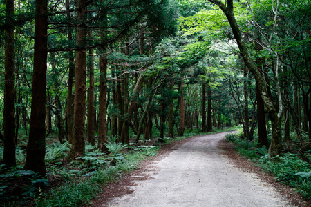 사리 오니 숲, 제주도, 한국