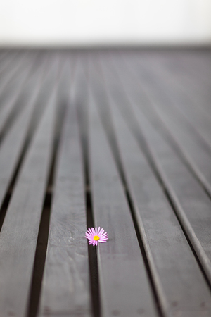 Flower on wooden floor