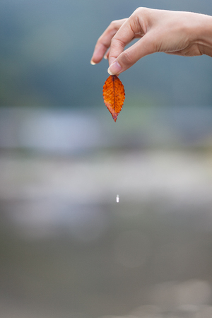 Isolated shot of a womans hand holding a autumn tinted leaf 免版税图像
