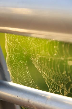 Close up shot of shining spider web
