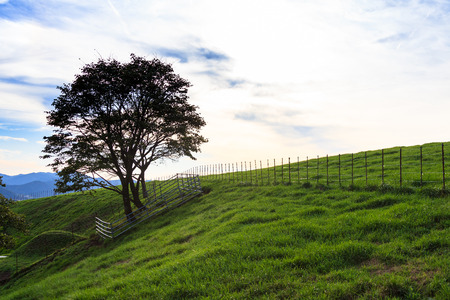 Scenery of green lawn filed on hills and trees