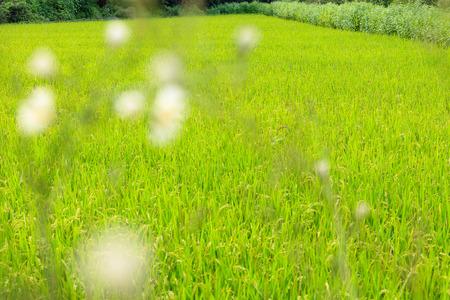 Full shot of green grass field Stock Photo
