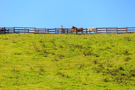 Flock of horses behind fences walking across horizon
