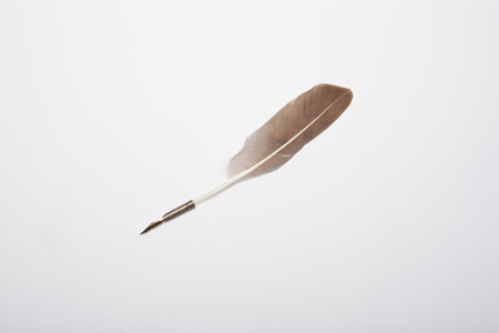 Feather quill isolated on white