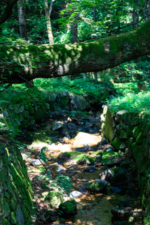 republic of korea: Dried creek in the forest