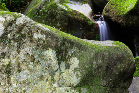 the miners: Creek in the forest