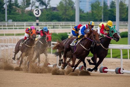 raza del caballo