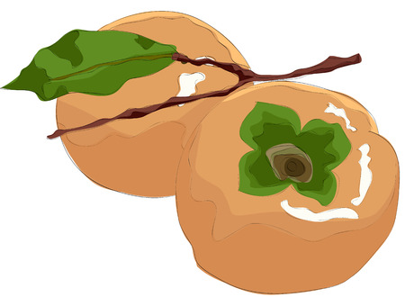 Painting of persimmon