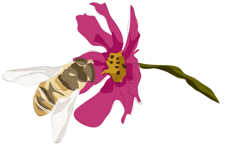 Painting of bee on flower