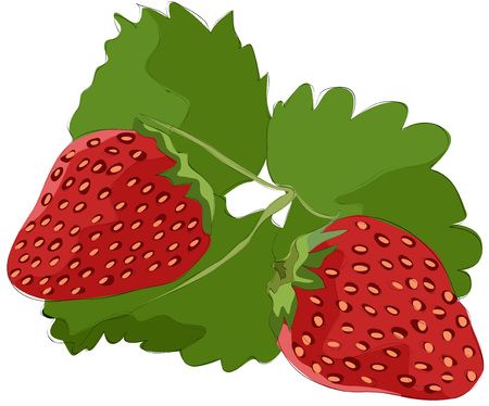 Painting of strawberry
