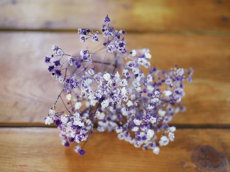 Flower decoration - purple gypsophila Stock Photo