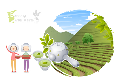 Tour attraction - Boseong green tea farm