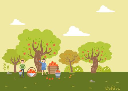 People harvest persimmon