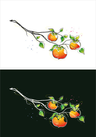 Two version background of persimmon sketch 일러스트