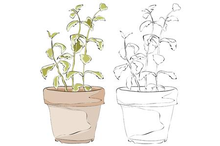 Vintage style hand drawn plant pots
