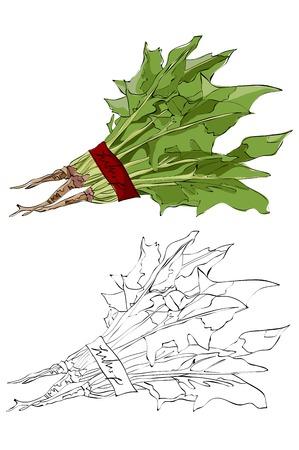 Vintage style hand drawn radish leaves.