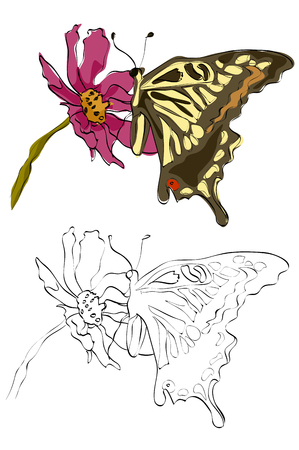 Vintage style hand drawn swallowtail butterfly on a flower.