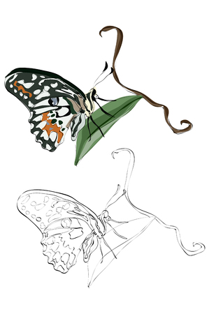 Vintage style hand drawn swallowtail butterfly on a leaf