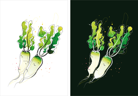 Two version background of radish sketch