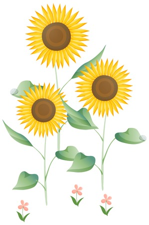 Sunflower illustration on white background.
