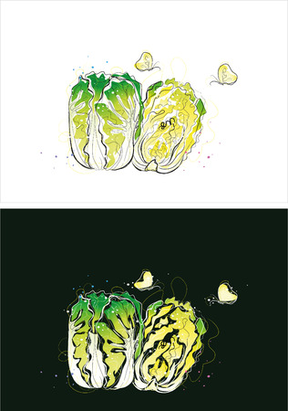 Two version background of Chinese cabbage sketch