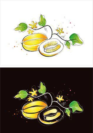 Two version background of oriental melon sketch Illustration