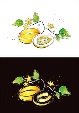 Two version background of oriental melon sketch Stock Illustratie