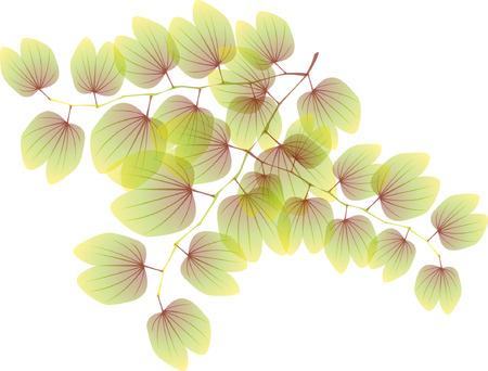 Opaque plant pattern Фото со стока - 90775405