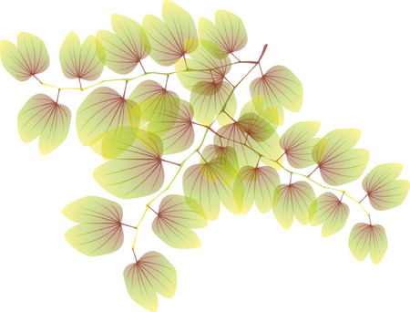 Opaque plant pattern