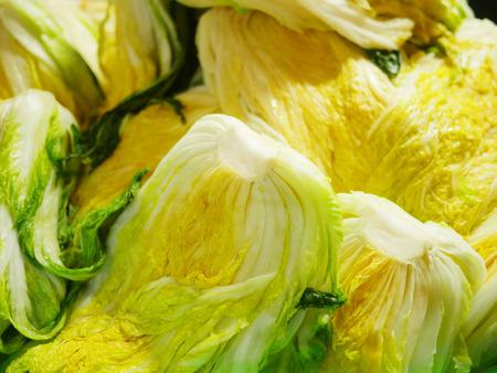 Making Korean style pickled cabbage, Kimchi