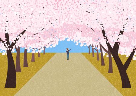 톰 테마, 벚꽃 나무 그림에 차도. 스톡 콘텐츠 - 91183348